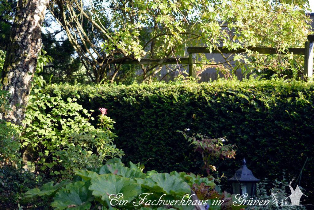 Hecken sind für viele Tiere wichtig und machen den Garten naturnah.