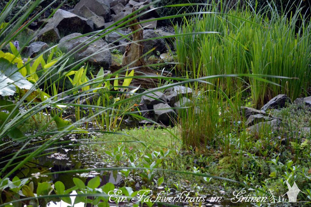Ein Gartenteich gehört auch in einen naturnahen Garten.