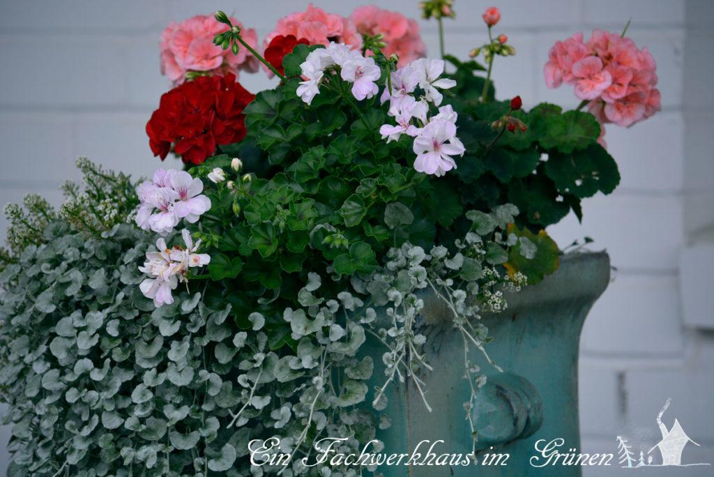 bepflanzter Kübel
