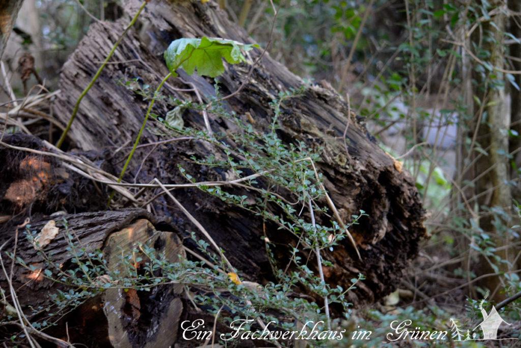 Totholz gehört einfach in einen naturnahen Garten