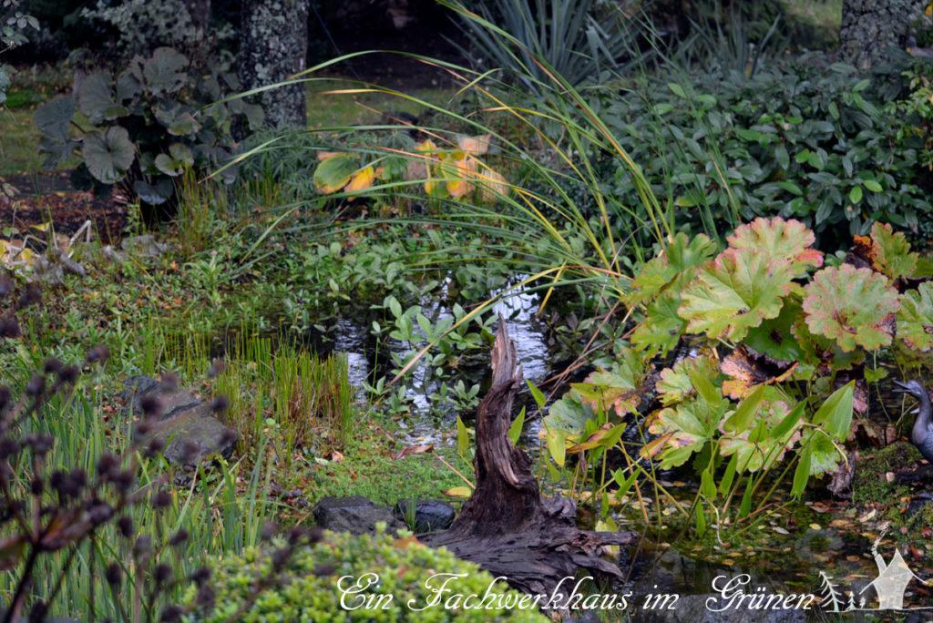 Gartenteich, Teichpflanzen