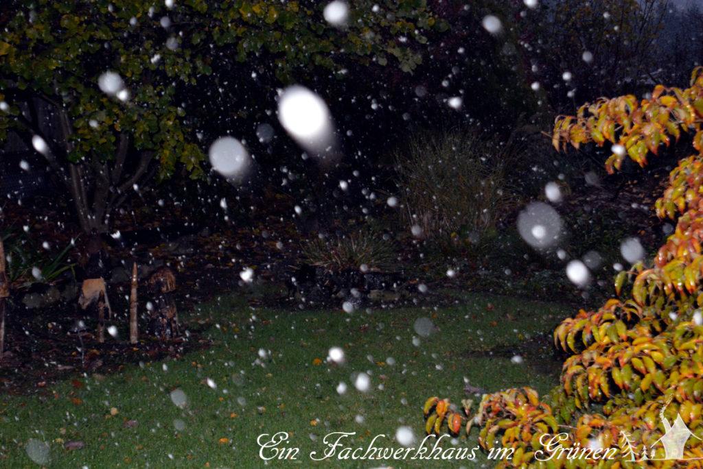 Schneefall, Winter, Garten
