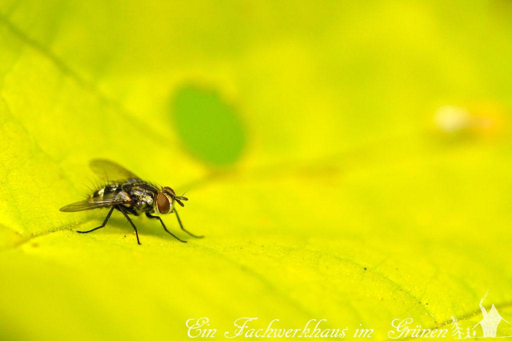 Im Garten stören mich Fliegen nicht.