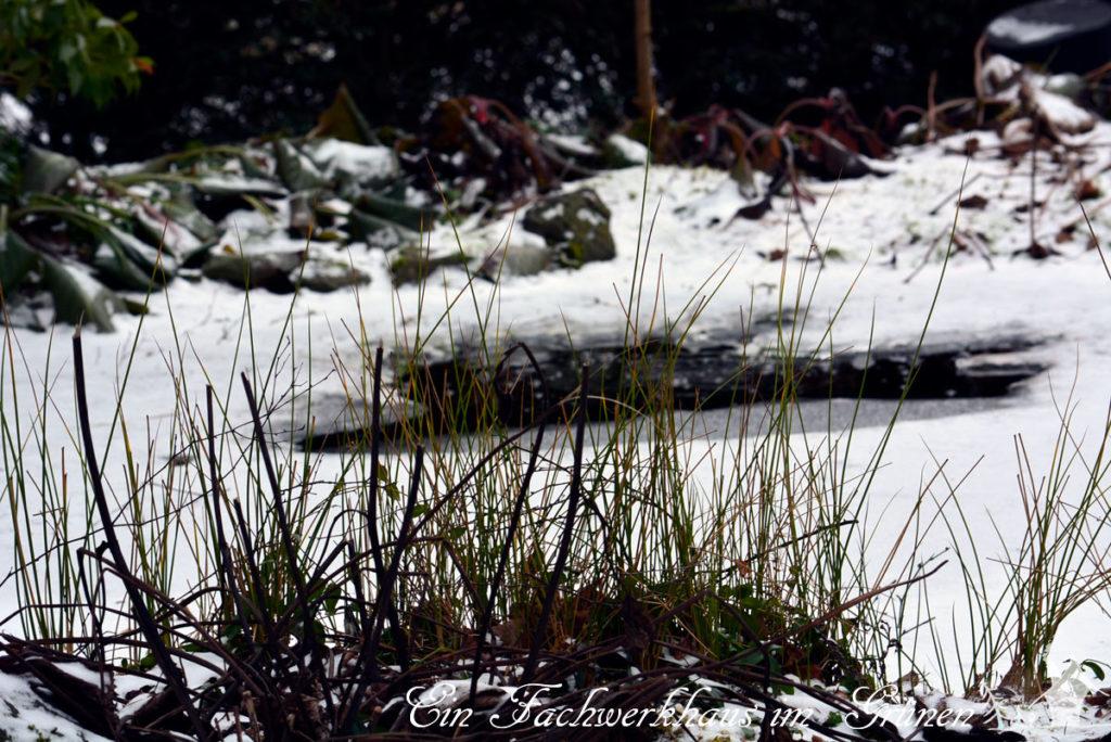 Impressionen aus dem Wintergarten. Der Teich ist beinahe zu gefroren.