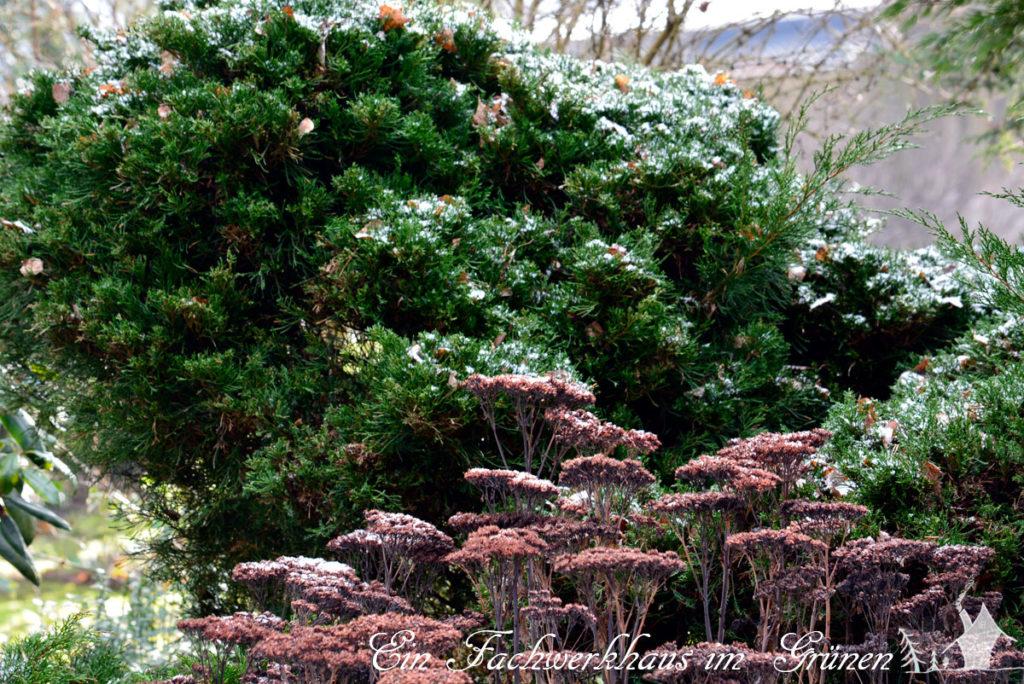 Impressionen, Garten, Winter