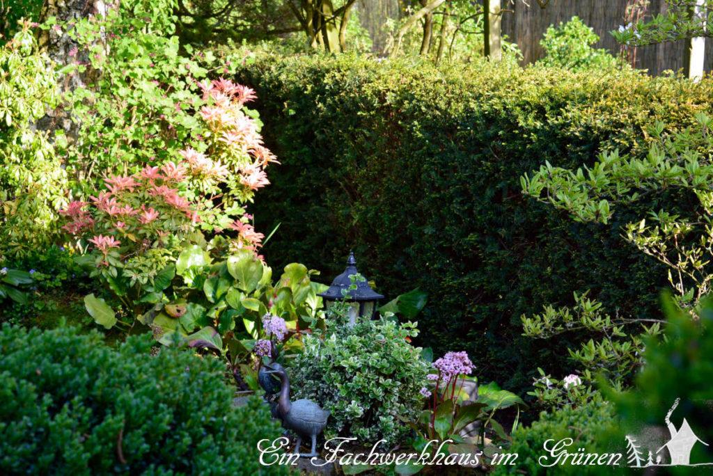 Eiben trennen den Garten in verschiedene Bereiche.