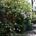 Hecken im Garten