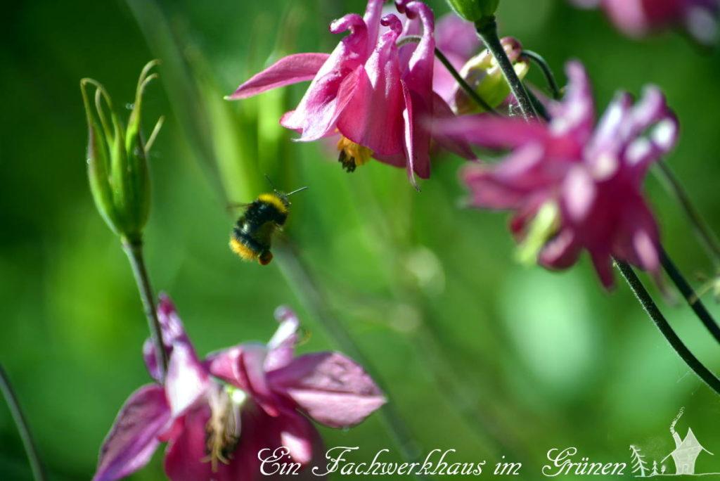 Eine Biene im Anflug.