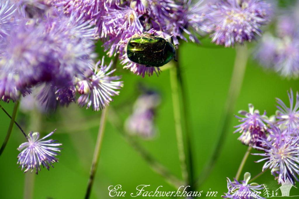 Ein uns unbekanntes Insekt.