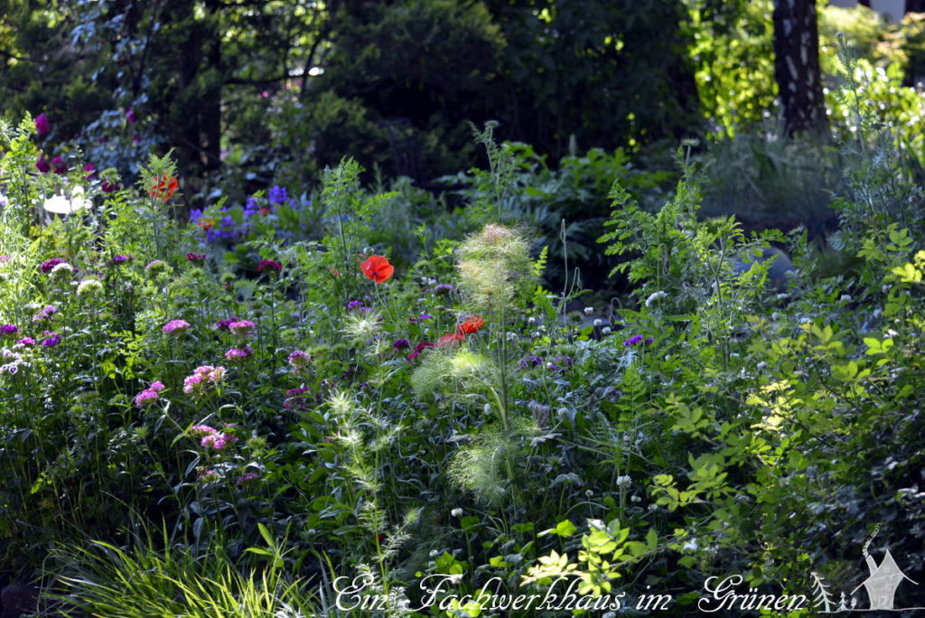 Die Insektenwiese in unserem Garten aus einem anderen Blickwinkel.