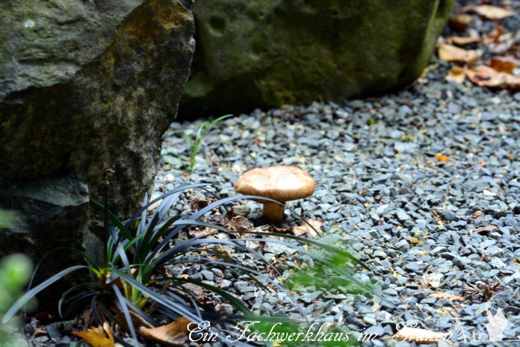 Pilze haben für das Leben eine geradezu unheimliche Bedeutung.