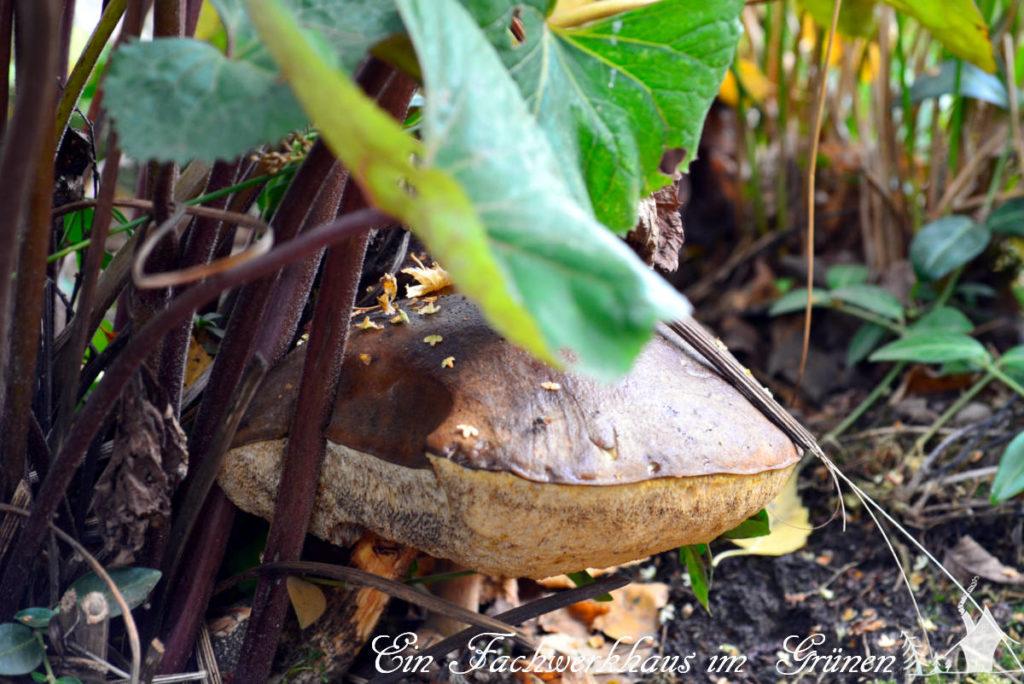 Pilze wachsen wirklich überall.