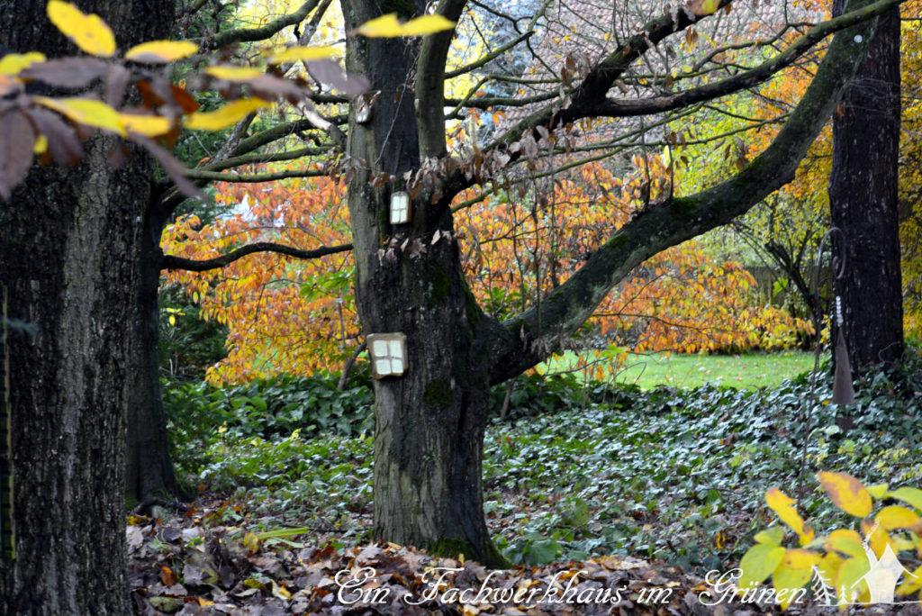 Überall liegt Laub zwischen den Bäumen.