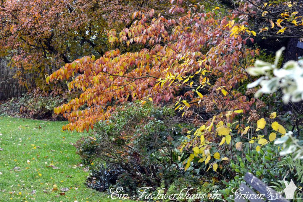 Farbenfrohe Herbststimmung im Garten.
