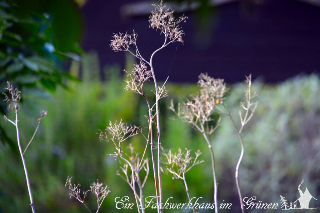 Samenstände im herbstlichen Garten.