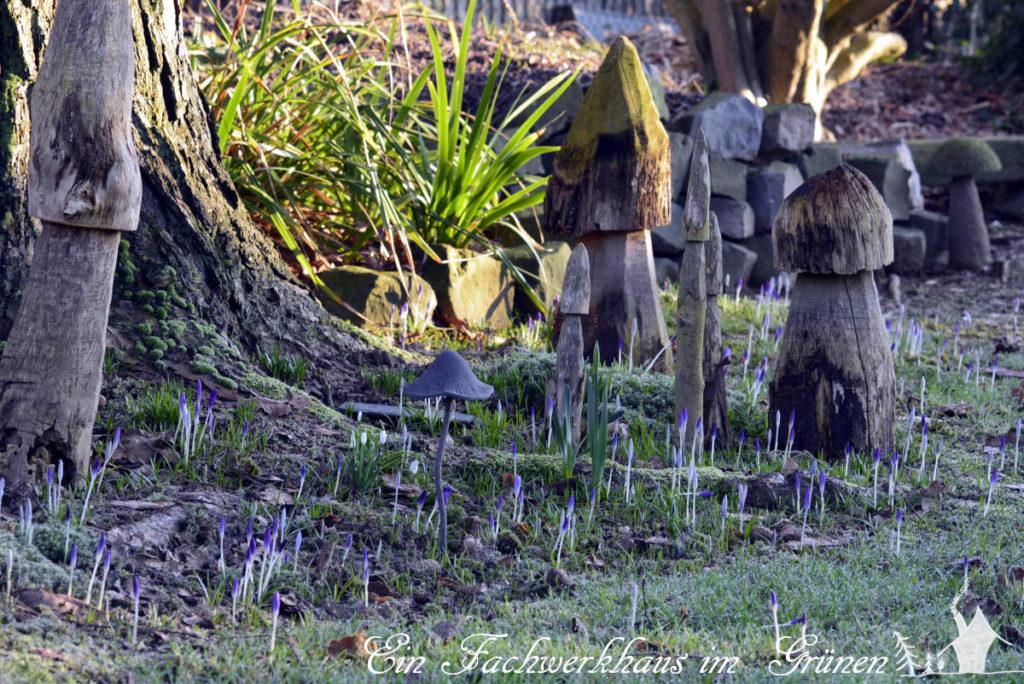 Noch schlafe die Krokusse im Garten. Ihre Blüten sind geschlossen.